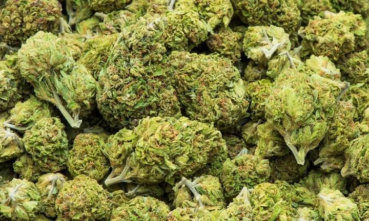 Влияние марихуаны на вич семена для гидропоники дешево
