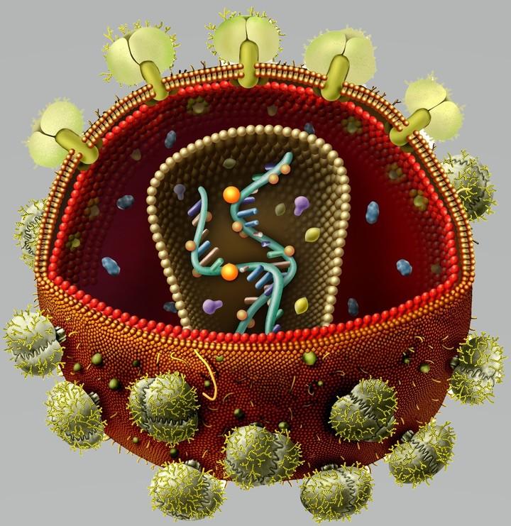 Картинки спида вируса